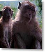 Monkey's Attention Metal Print