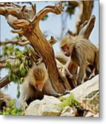 Monkeys On Mountain Metal Print