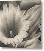 Mono Daffodil Metal Print