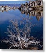 Mono Lake Salt Bush Metal Print