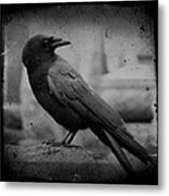 Monochrome Crow Metal Print