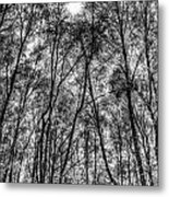 Monochrome Forest Metal Print