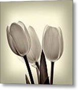Monochrome Tulips With Vignette Metal Print