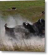 Montana Bison 1 Metal Print by T C Brown
