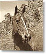 Montana Horse Portrait In Sepia Metal Print