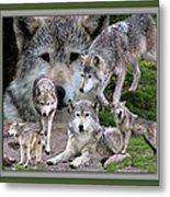 Montana Wolf Pack Metal Print