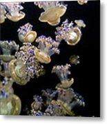 Monterey Aquarium Jellyfish Metal Print