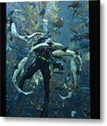 Monterey Bay Aquarium Diver Metal Print