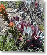 Monterey Indian Paintbrush And Ice Plant Metal Print by Bruce Gourley