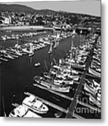 Monterey Marina With Fishing Boats In Slips Sept. 4 1961  Metal Print