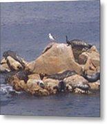 Monterey Sun Bath Metal Print
