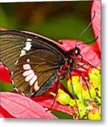 Montezuma Cattleheart Butterfly Metal Print