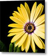Montgomery County Flower Metal Print