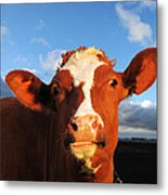 Moo Don't Say Cow Metal Print