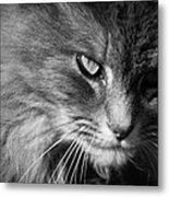 Moody Cat Metal Print
