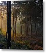 Moody Forest Happy Sun Metal Print