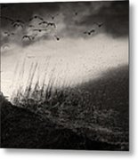 Moody Sunrise With Grasses And Birds Metal Print