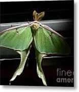 Moon Moth Metal Print