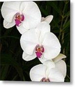 Moon Orchid With Purple Center Metal Print