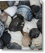 Moon Snails And Shells Still Life Metal Print