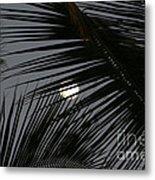 Moon  Through Palm Trees Metal Print