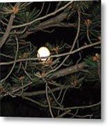 Moon Through Pines Metal Print