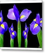 Moonlight Purple Flower Selection Romantic Lovely Valentine's Day Print Metal Print