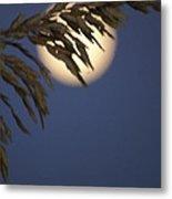 Moonlight Sea Oat Metal Print