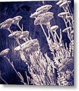 Moonlight Yarrow Metal Print