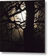 Moonlit Tree In The Forest Metal Print