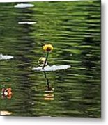 Moore State Park Lily Pond 2 Metal Print