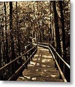 Moores Creek Battlefield Nc Swamp Walk  Metal Print