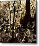 Moores Creek Swamp Metal Print