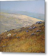 Moorland Sheep Metal Print