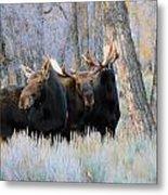 Moose Meeting Metal Print