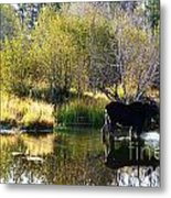Moose Reflection Metal Print