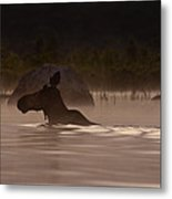 Moose Swim Metal Print