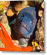 Moray And Starfish Metal Print