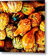 More Beautiful Gourds - Heralds Of Fall Metal Print