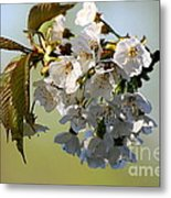 More Spring Flowers Metal Print