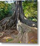 Moreton Bay Fig Tree From Jurrasic Park Metal Print