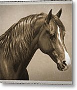 Morgan Horse Old Photo Fx Metal Print