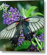 Mormon Butterfly Metal Print