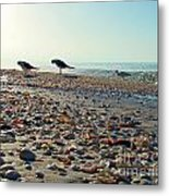 Morning Beach Preen Metal Print