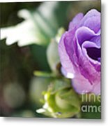 Morning Blossom Metal Print