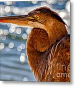 Morning Blue Metal Print by Pam Vick