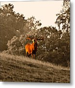 Morning Call Metal Print