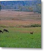 Morning Deer In Cades Cove Metal Print
