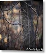 Morning Dew Metal Print