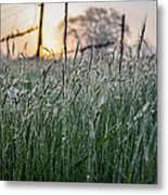 Morning Dew - View Through The Grass Metal Print